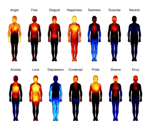 How Emotions Effect The Human Body