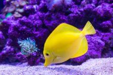 Best Gemstones To Add To Your Aquarium