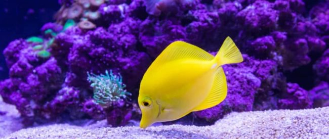 Best Gemstones To Add To Your Aquarium