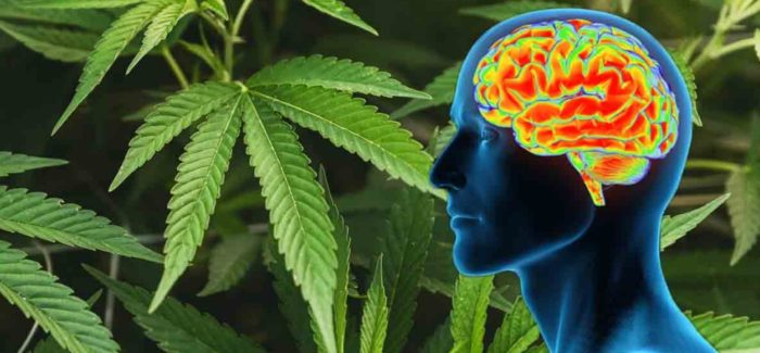 CBD Effects On Your Brain
